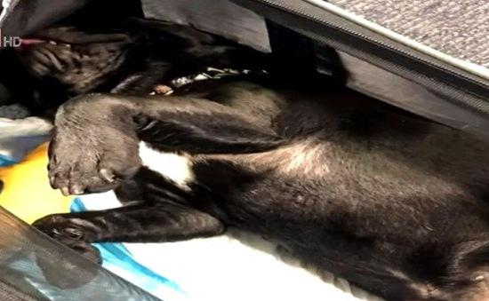 Mỹ: Hãng hàng không bị chỉ trích vì làm chết ngạt chú chó trong khoang hành lý