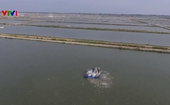 Rà soát lại diện tích thả nuôi cá tra ở đồng bằng sông Cửu Long