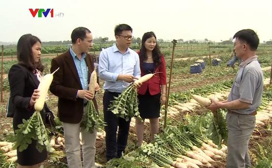Doanh nghiệp hỗ trợ tiêu thụ nông sản ế thừa