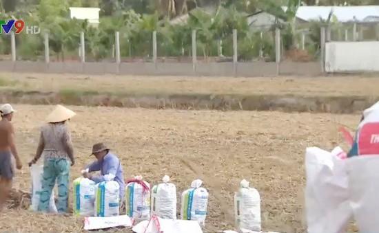 Vĩnh Long: Nông dân ồ ạt bán đất mặt ruộng