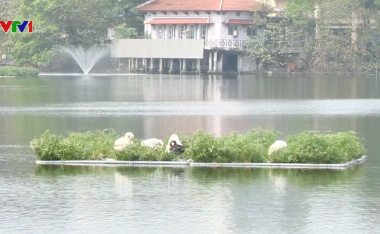 Chất lượng nước 86 hồ nội thành Hà Nội ngày càng được cải thiện