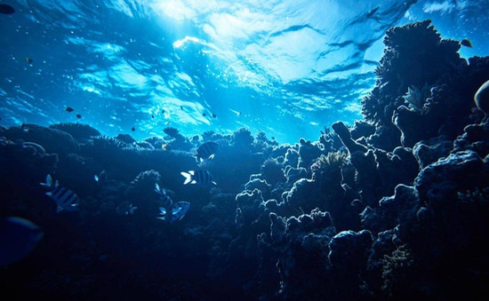 """Bất ngờ với khám phá thú vị về """"vùng biển hoàng hôn"""" ở Caribe"""