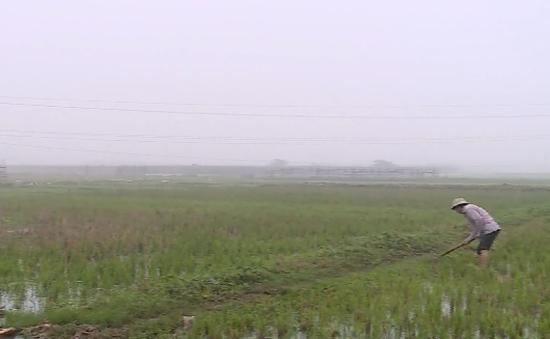 Gần 2.000ha đất lúa ở Hà Nội chưa có nước sản xuất