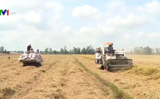 Giá lúa tăng nhưng nông dân kém vui