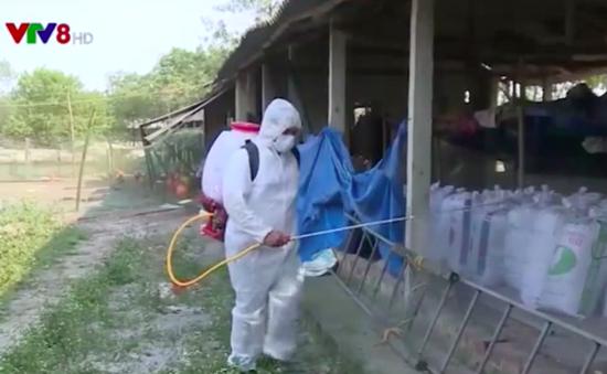 Thừa Thiên Huế: Tăng cường tiêu độc khử trùng tháng cao điểm