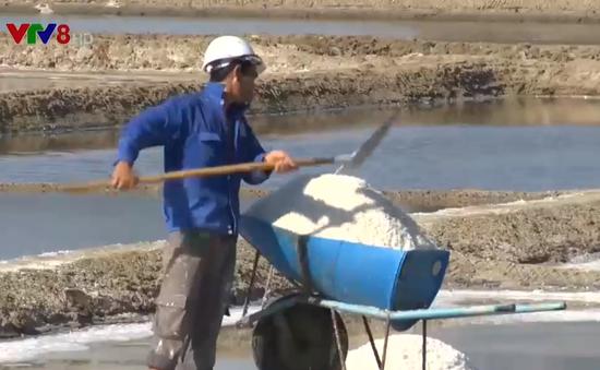 Giá muối liên tục giảm ở Ninh Thuận, diêm dân chịu thiệt