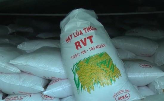 Phát hiện hơn 1.000 tấn lúa giống giả nhãn mác ở Cần Thơ