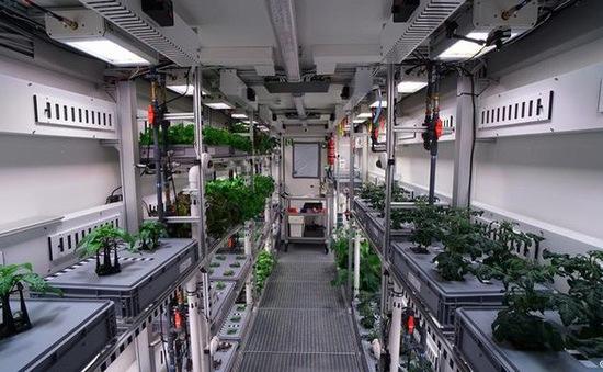 Phi hành gia có thể trồng lượng rau lớn trong vũ trụ và trên Sao Hỏa
