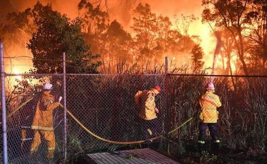 Cháy rừng nghiêm trọng ở ngoại ô Sydney, Australia