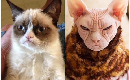 """Cô mèo cáu kỉnh một thời nay có """"hậu duệ"""" mới chất đừng hỏi"""