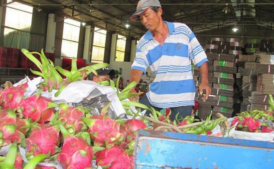 Truy xuất nguồn gốc trái cây xuất sang Trung Quốc: DN cần chuẩn bị tốt
