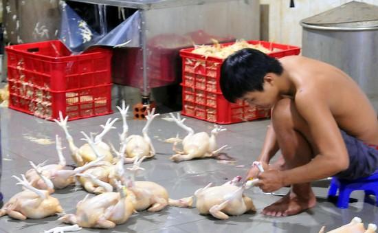 Bắt quả tang lò giết mổ gà không phép mang đi TP.HCM tiêu thụ