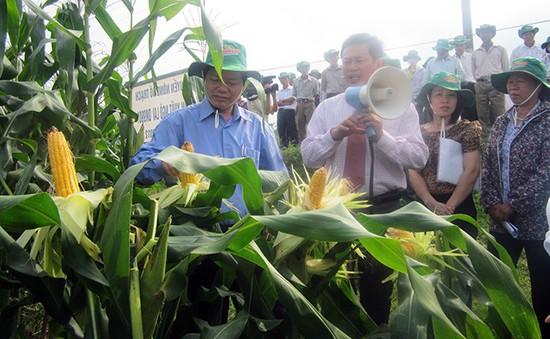 Hiệu quả mô hình nông nghiệp Công nghệ cao ứng phó biến đổi khí hậu