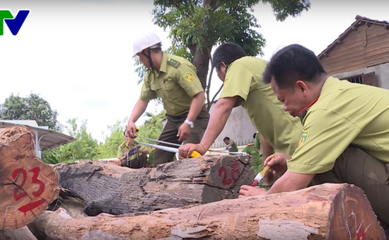 """Bộ Công an phát hiện thêm nhiều gỗ quý trong kho của Phượng """"râu"""" dành xây biệt thự"""