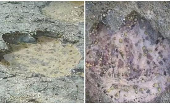 Phát hiện dấu vết khủng long niên đại 170 triệu năm ở Scotland