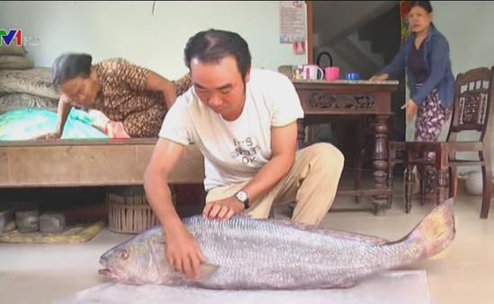 Ngư dân Quảng Nam bắt được cá lạ nghi là cá sủ vàng quý hiếm