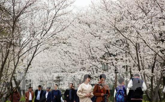Ngắm hoa trong dịp Thanh minh tại Trung Quốc