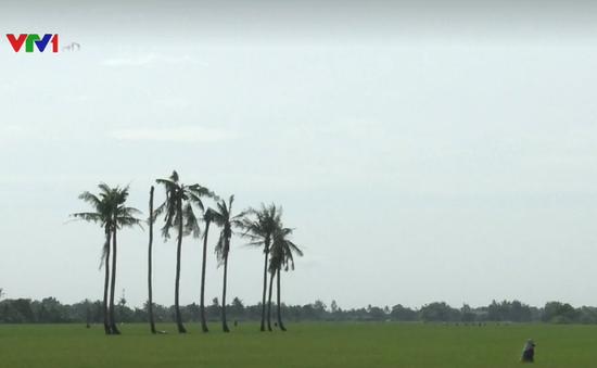 Phát hiện gen giảm tác động nhiễm mặn của lúa