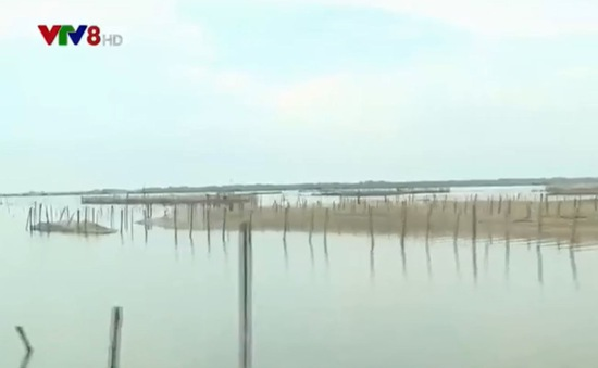 Thừa Thiên Huế: Khó khăn nuôi trồng thủy sản do hệ sinh thái suy kiệt