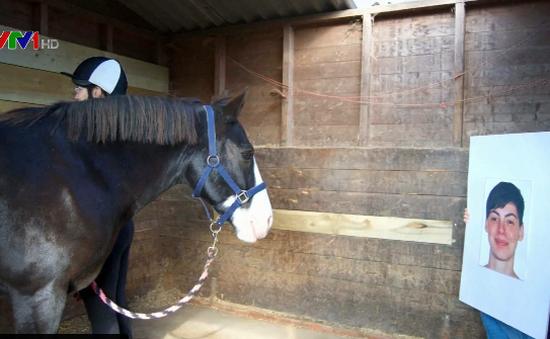 Ngựa có thể nhận biết cảm xúc của con người