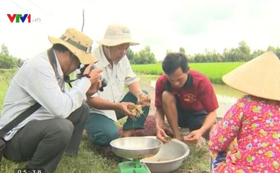 Mô hình tôm - lúa cho lợi nhuận cao tại Kiên Giang
