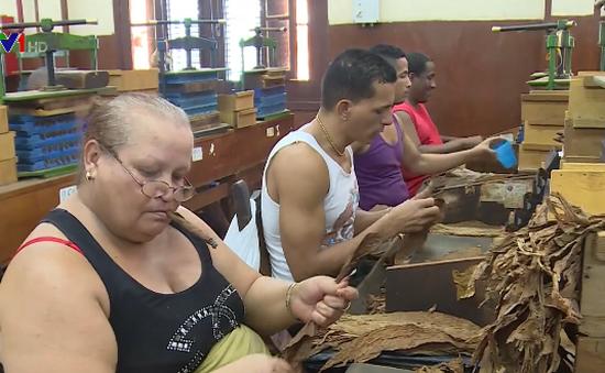 Cận cảnh quy trình sản xuất xì gà Cuba trứ danh thế giới