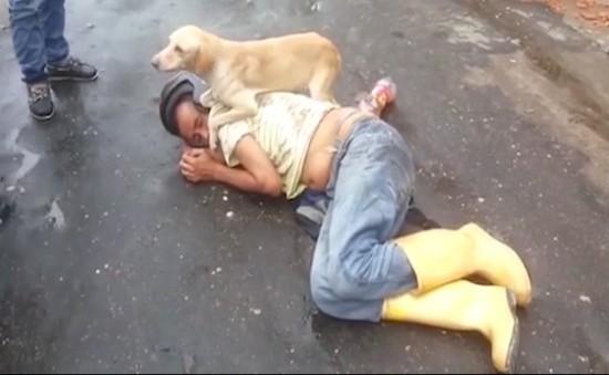 Chủ say xỉn nằm giữa đường, chú chó nhất quyết không cho ai đánh thức