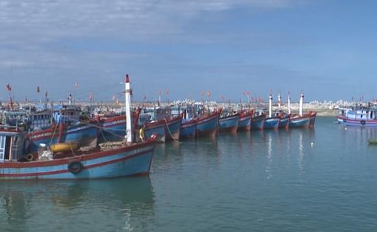 Đà Nẵng tăng cường truy xuất nguồn gốc thủy sản khai thác