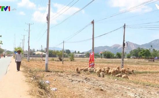 Nhiều giải pháp ứng phó với hạn hán tại Ninh Thuận