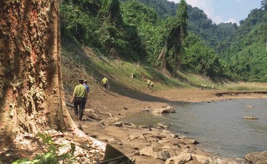 Những kiểm lâm giữ rừng lim quý hiếm tại Quảng Nam