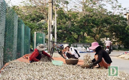 Nông dân Lý Sơn trữ tỏi khô chờ bán giá cao