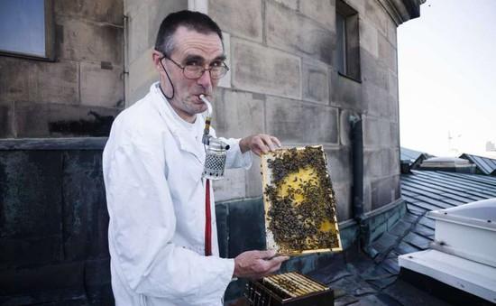 """""""Khách sạn"""" ong ở Berlin, Đức"""