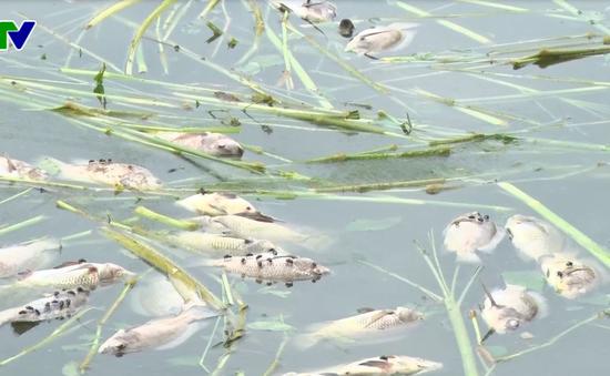 Cá nuôi chết bất thường ở Kon Tum: Môi trường nước bị ô nhiễm nấm thủy my