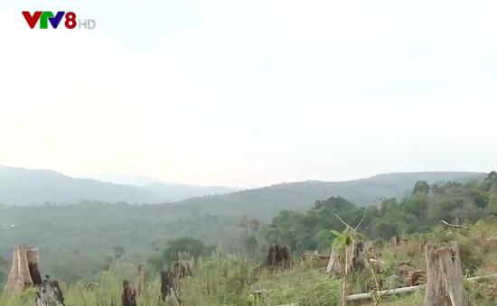 Bùng phát phá rừng nguyên sinh làm trang trại ở Kon Tum