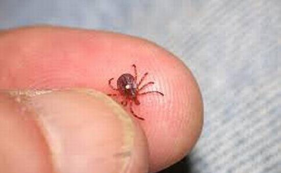 Hoá chất diệt bọ ve trú trong quần áo