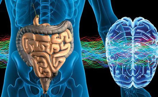 Bí mật về bộ não thứ hai của con người... ở bụng