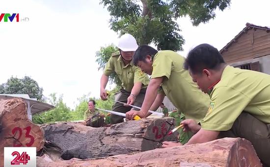 Vụ buôn lậu gỗ quy mô lớn ở Đăk Nông: Ai chịu trách nhiệm?