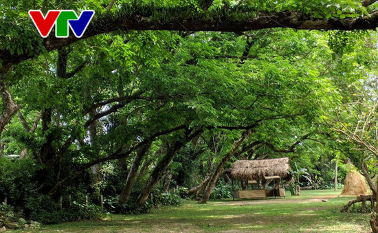 Quảng Nam đẩy mạnh phát triển du lịch sinh thái