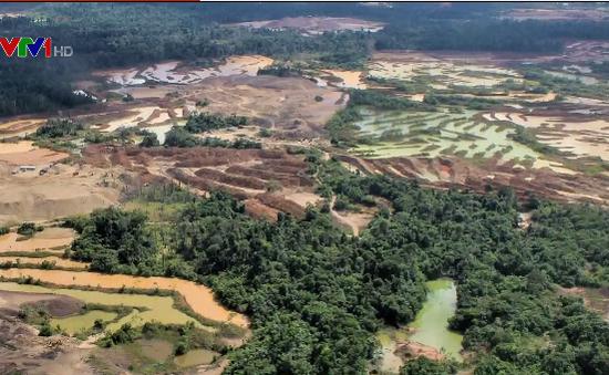 Từ 2001-2016, rừng Amazon tại Peru bị tàn phá với tốc độ nhanh