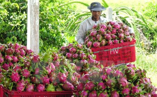 Việt Nam hướng tới xuất khẩu bền vững