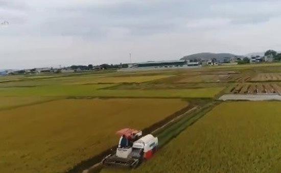 Tái diễn tình trạng bảo kê máy gặt trong ngày mùa