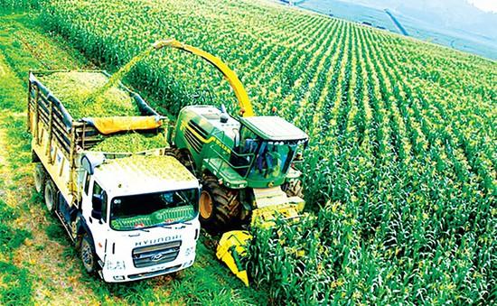 Phát triển tư duy kinh tế nông nghiệp: Giải pháp giúp nông dân làm kinh tế