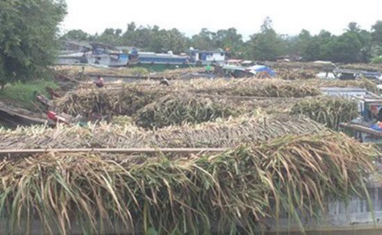 Long An: Nông dân bán mía phải nhận đường