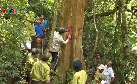 Hoàn thiện chính sách khuyến khích người dân bảo vệ rừng