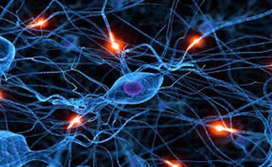 Thuốc ảo giác có thể thay đổi cấu trúc của tế bào não