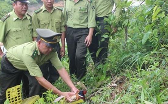 Hà Tĩnh: Thả động vật hoang dã về Vườn Quốc gia Vũ Quang