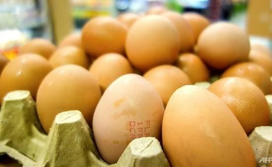 Ba Lan thu hồi hàng triệu quả trứng gà chứa dư lượng kháng sinh