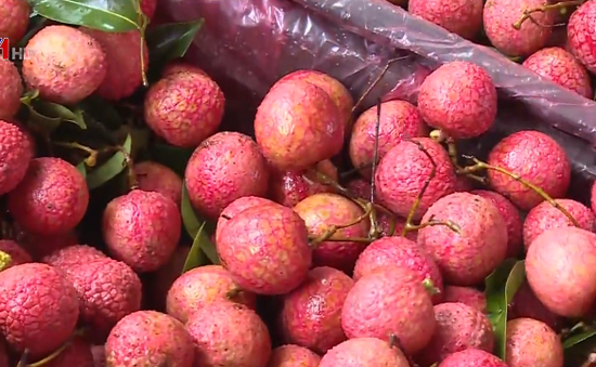 Bắc Giang sẽ là thủ phủ trái cây của miền Bắc hình thành ngành kinh tế cây ăn quả