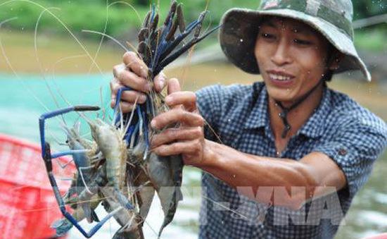 Bộ Nông nghiệp và Phát triển nông thôn khuyến cáo nên đẩy mạnh nuôi tôm sú