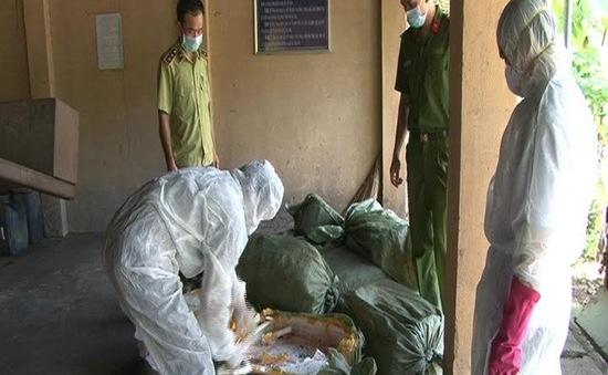 Quảng Ninh: Tiêu hủy 1 tấn lợn nhập lậu